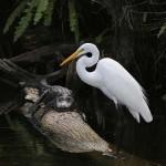 Parque Nacional de los Everglades, en Florida