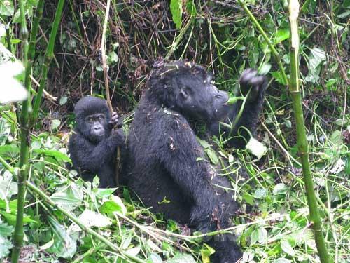 El Parque Nacional Impenetrable de Bwindi