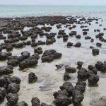 La Bahía Shark y sus primitivos habitantes