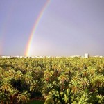 Palmeral de Elche, atracción espectacular