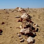 Wadi Al-Hitan, el desértico valle de las ballenas