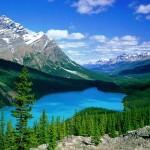 El Parque Nacional del Búfalo de los Bosques en Canadá