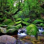 El bosque de Yakushima