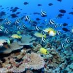 La Gran Barrera de Coral australiana