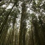 Reserva de la Biosfera del Bosque Mbaracayú