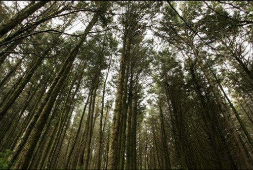 bosque mbaracayu