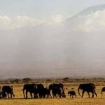 Parque Nacional Serengeti, en Tanzania