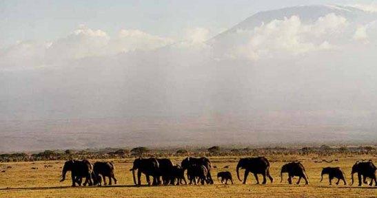 parque-nacional-serengeti