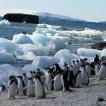 Las Islas Subantárticas en Nueva Zelanda