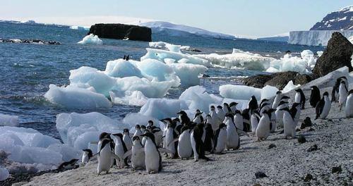 patrimonios- islas subantaricas