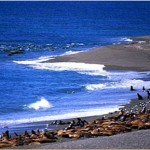 Península Valdés, patrimonio de Argentina