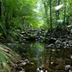 Los bosques húmedos de Queensland