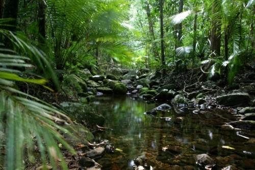 queensland-bosques-humedos